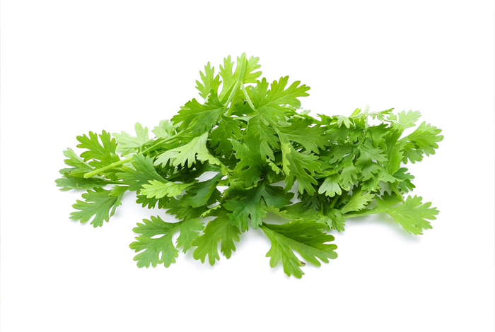 Coriander Herb Oil
